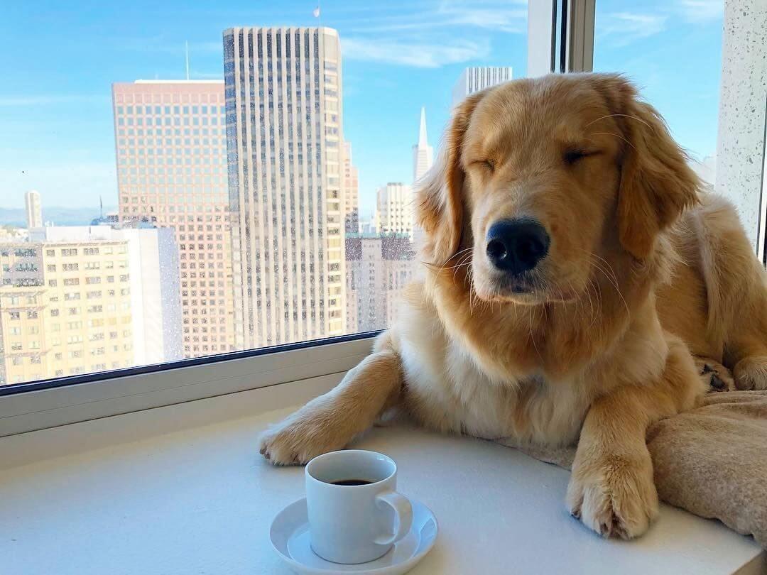 آیا سگ ها همیشه می توانند چای گیاهی بنوشند؟