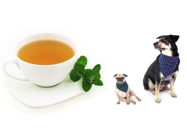 آیا سگ ها می توانند چای بنوشند؟