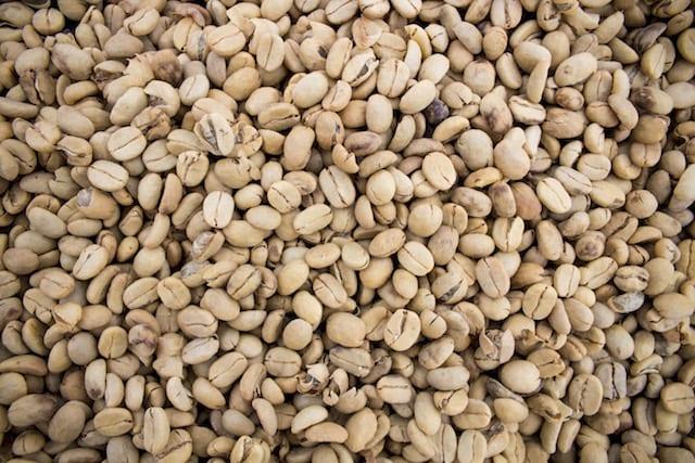 دانه قهوه چیست؟ آناتومی گیلاس گیاه قهوه